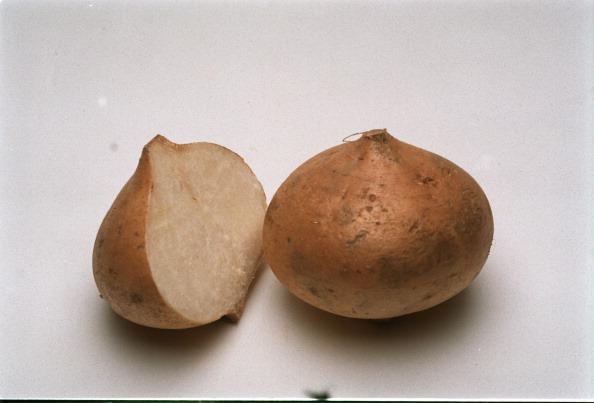 Ejemplares de jícama utilizada para elaborar pan