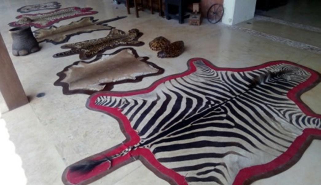 Profepa decomisa pieles en la frontera sur de Mexico