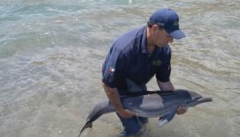 Profepa rescata y reintegra a delfín varado en Loreto
