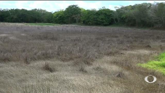 noticias, televisa, Sequía, pone en riesgo, Calakmul, sequias