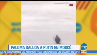 presidente de Rusia, Vladimir Putin, paloma, Moscú