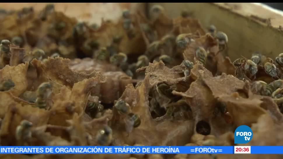 noticias, forotv, La dama real, Yucatán, miel, abeja