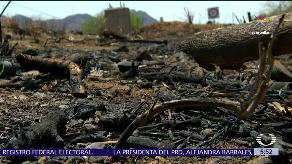 sonora, incendios forestales, Yecora, Álamos, zona serrana