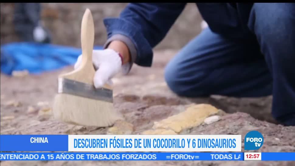 equipo de paleontólogos, fósiles de cocodrilo, huesos, dinosaurios en China