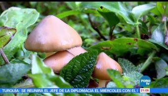 noticias, forotv, Niños Santos, parte 2, María Sabina, Oaxaca