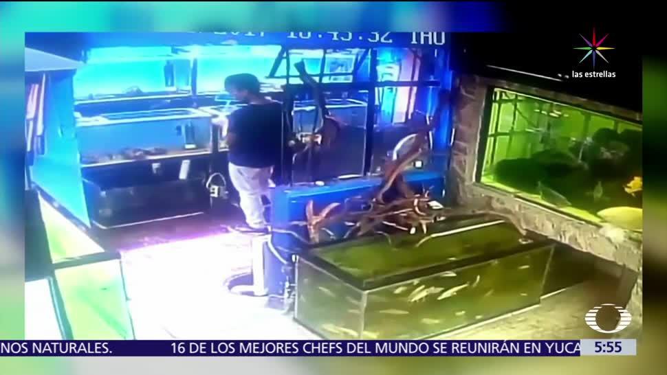 acuario de Guadalajara, robar peces, guarda, bolsa del pantalón