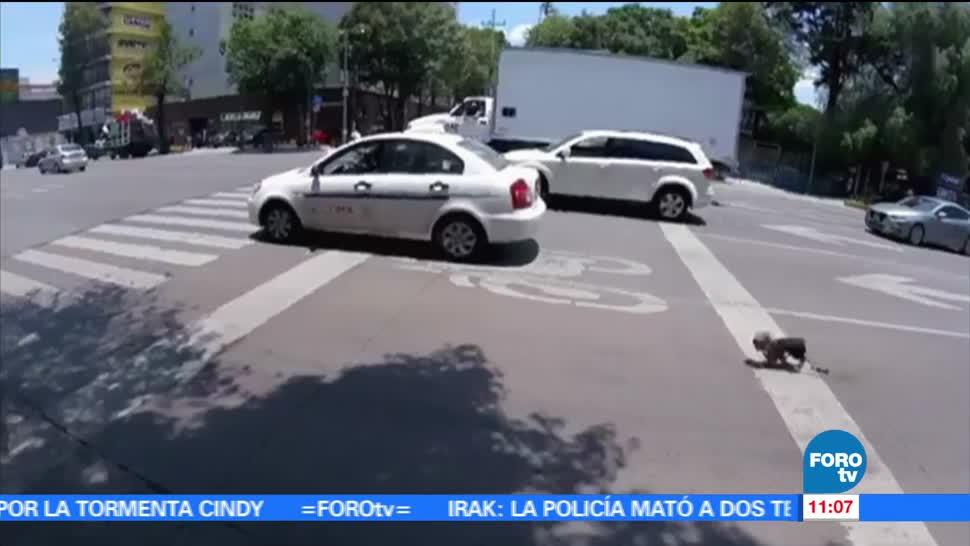 ciclista, avenida Revolución, pequeño perro, dueño