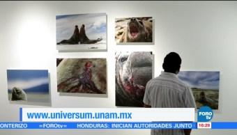 exposición, TerritorioIndómito, biodiversidad, Islas Falkland