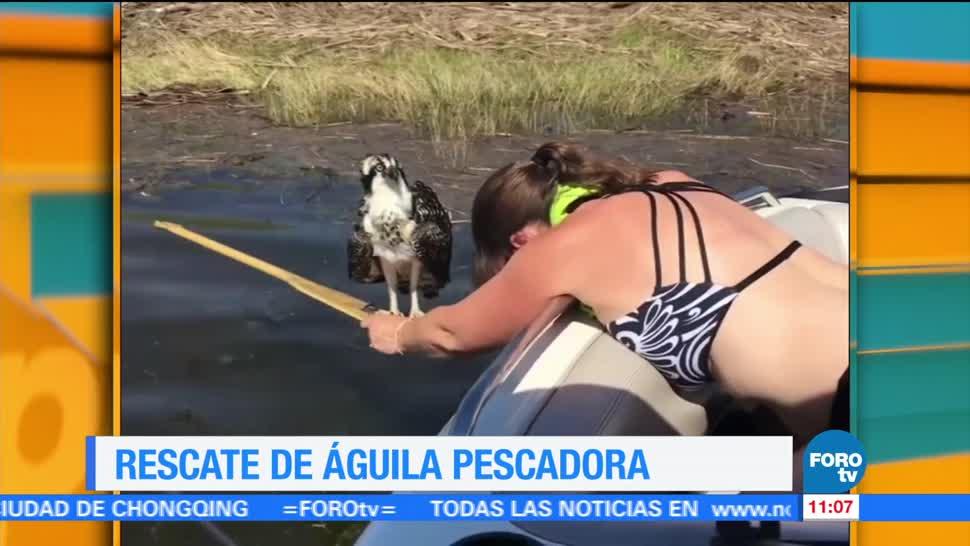 mujer, águila pescadora, río, rescató
