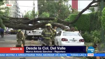 árbol, 30 metros de altura, San Francisco, colonia Del Valle