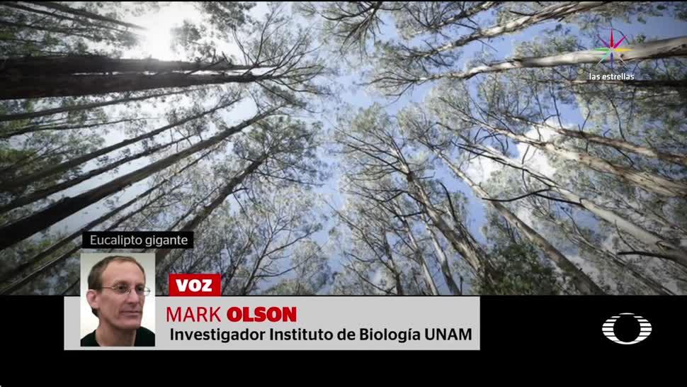 noticias, televisa, Los árboles, más espectaculares, mundo, Mark Olson
