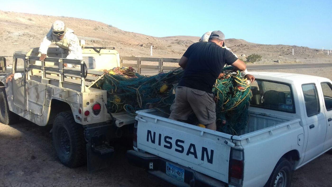 autoridades federales aseguran mallas de totoabas en bc