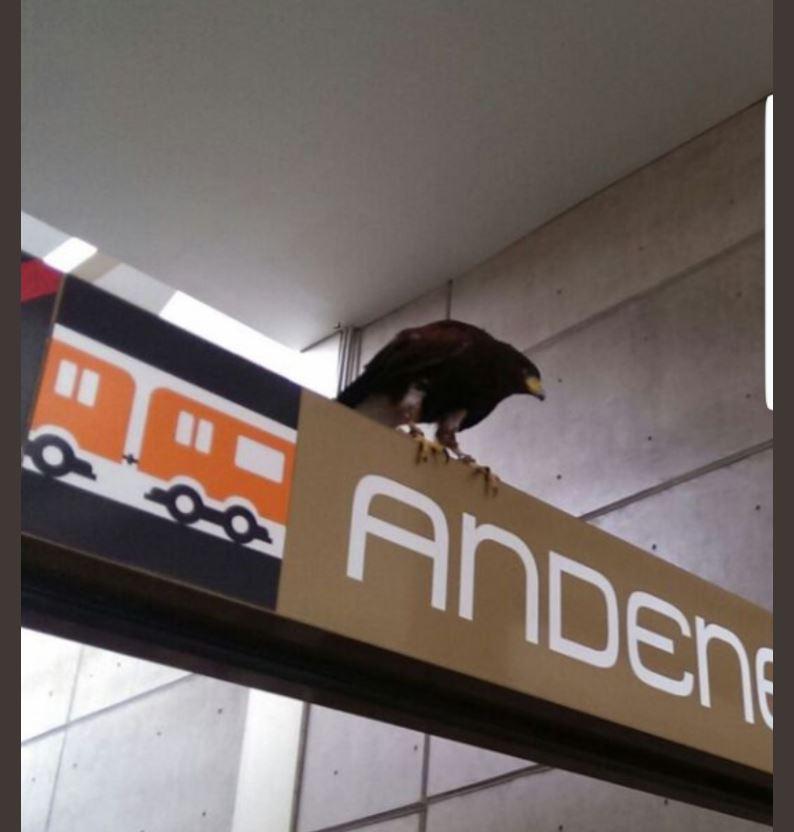 águila real, estación, Nopalera, metro, ave