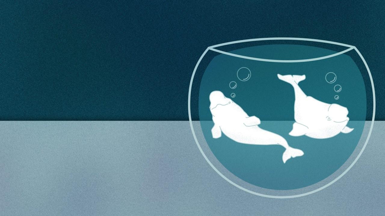 ballenas beluga, feria chapultepec, gasper, Nico, montaña rusa