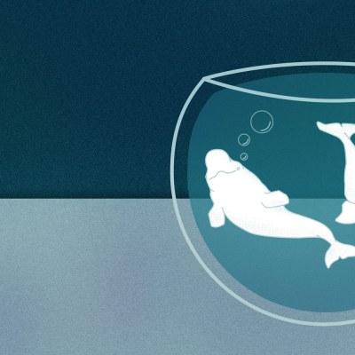 ¿Qué fue de las ballenas beluga de Chapultepec?