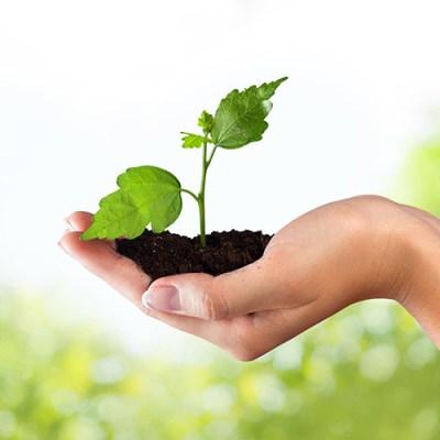 Día Mundial del Medio Ambiente, oportunidad para conectarse con el entorno