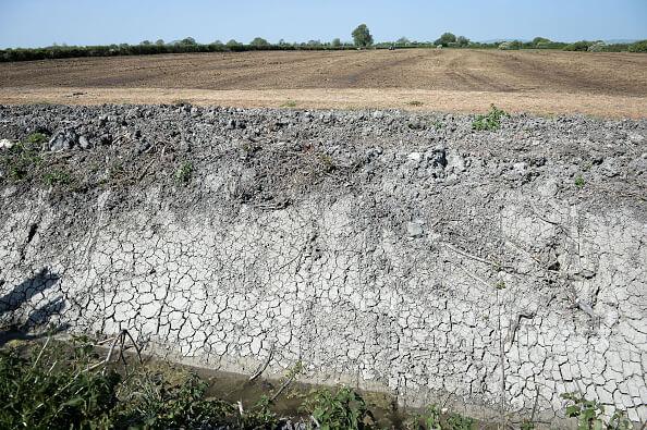 Sequia, Zacatecas, Cultivos, Sequia en zacatecas, cultivos afectados,