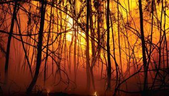 Incendio forestal afecta cientos de especies