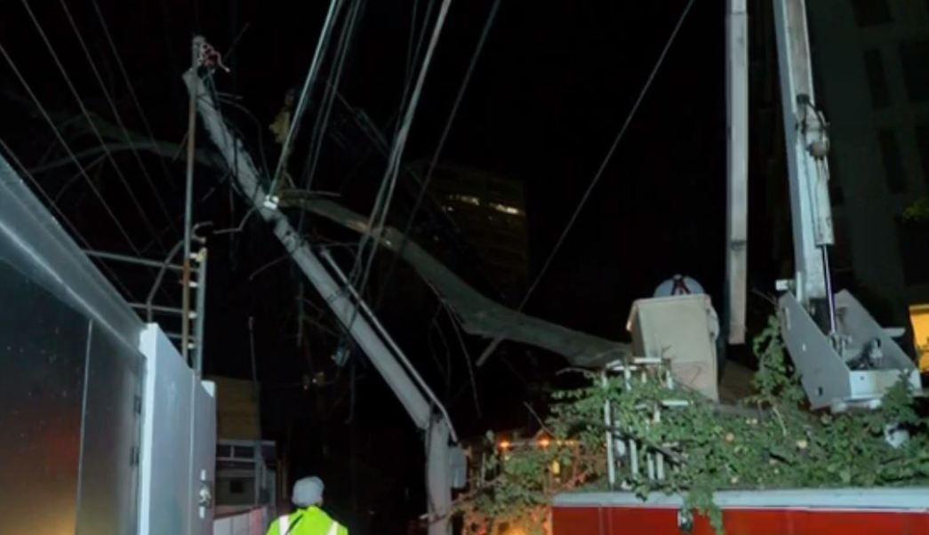 Fuertes vientos derriban árbol en Jalisco
