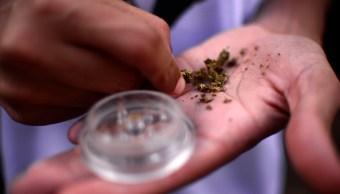 Marihuana es sostenida por una persona