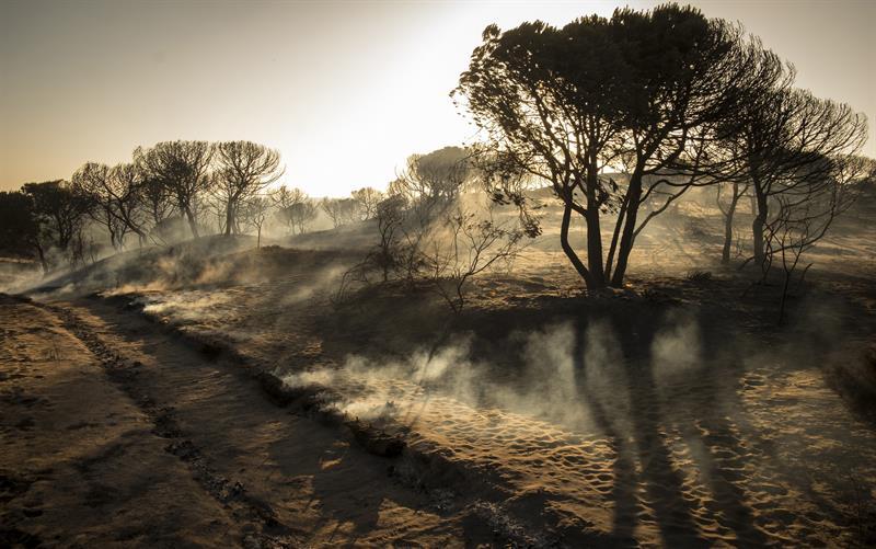 España, incendio, parque natural, Doñana, bomberos, siniestro