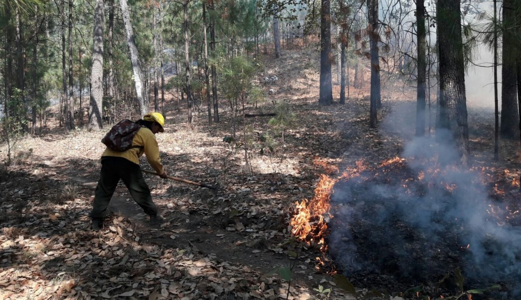 Incendios forestales, Sonora, Temperaturas, Calor, Falta de lluvia
