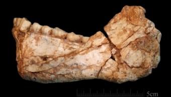 Mandibula de Homo sapiens hallada en Marruecos