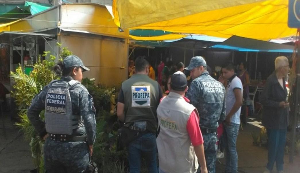 Realiza Profepa operativo en Morelia, Michoacán