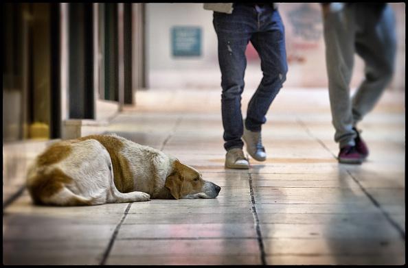 Perros callejeros, Temporada de Calor, Ciudad juarez, Proteccion animal, Noticias, noticieros