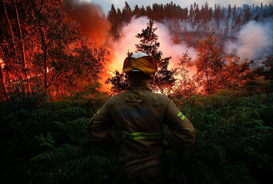 Portugal, Espera Ayuda, Combatir, Incendio, Fuego, Llamas, Aviones