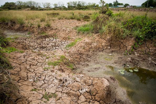 Sequía pone en riesgo cultivos en Cd. Juárez, Chihuahua