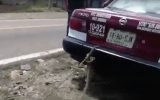 perro, Oaxaca, arrastran, taxi, Oaxaca, maltrato animal