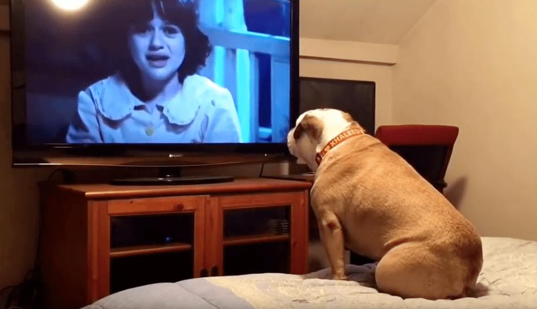 video viral, perro bulldog, película terror, Khaleesi