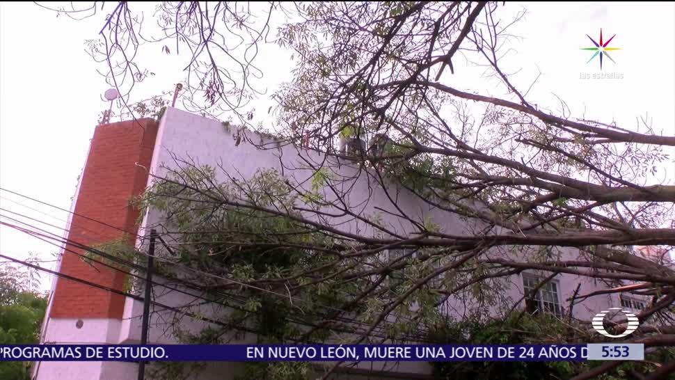 Guadalajara, cae árbol, barda de escuela, taxi, conductor