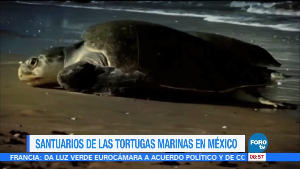 Ximena Cervantes, reportaje, santuarios, tortugas marinas