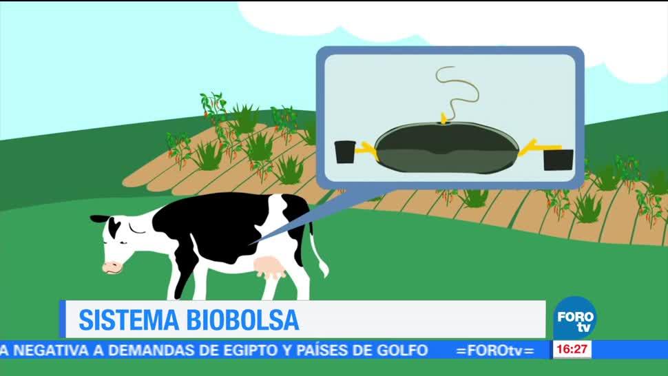 noticias, forotv, Biobolsa, empresa mexicana, desechos orgánicos, energía y fertilizante