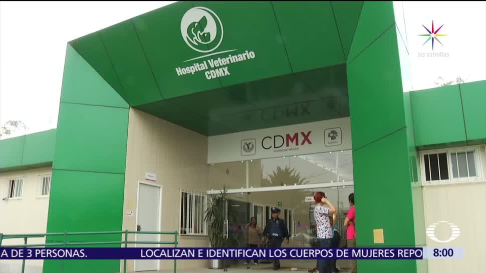 noticias, forotv, Hospital Veterinario, CDMX, salva la vida, perro callejero baleado