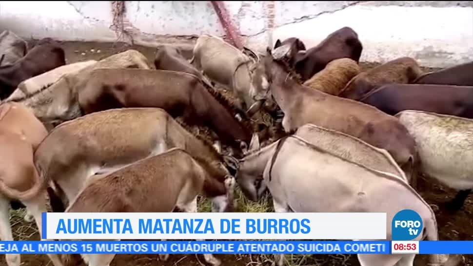 Extra Extra, Aumenta, matanza de burros