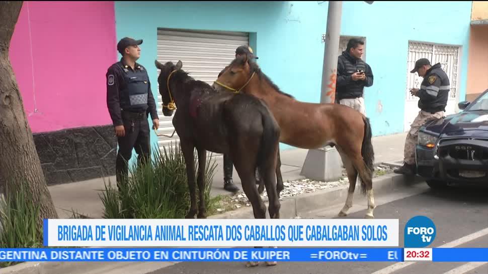 Rescatan, dos caballos, cabalgaban, solos, CDMX, Venustiano Carranza