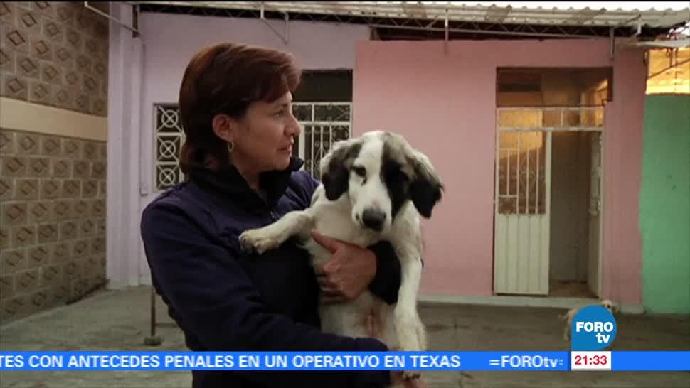 Comportamiento Perros Detonar Ataques Desarrollo Ansiedad