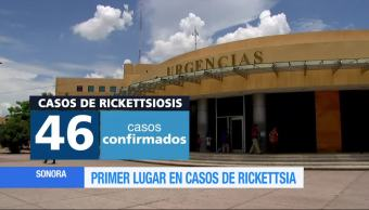 Sonora Tiene Primer lugar Casos Rickettsia Rickettsiosis
