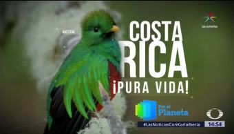 Costa Rica Especies Flora Fauna Por El Planeta