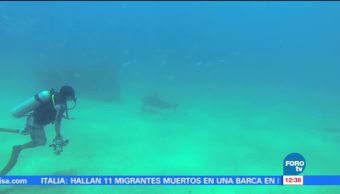 Encuentro, tiburones, Cabo Pulmo, BCS