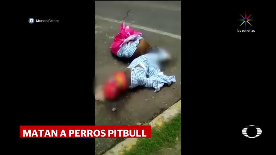 Denise Maerker Aparecen Perros Pitbull, Muertos CDMX