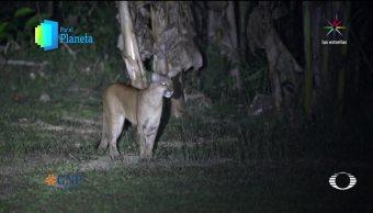 Por El Planeta Puma Costa Rica