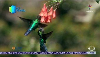 Televisa News Aves Aviturismo Costa Rica