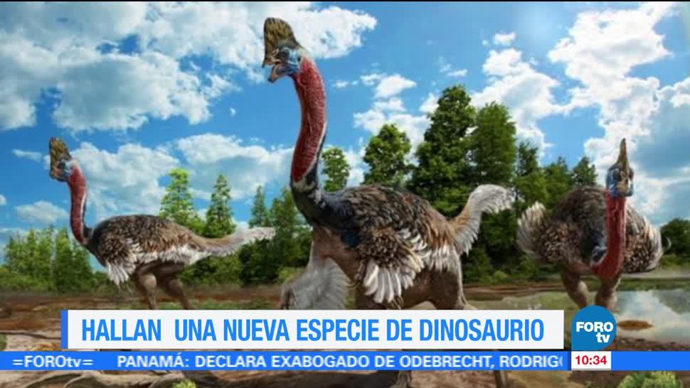 Extra Extra Hallan Nueva Especie Dinosaurio