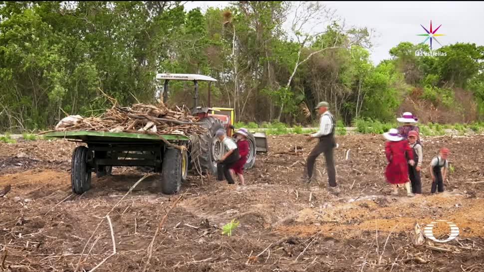 Acusan Menonitas Deforestar Hectáreas Selva Bacalar