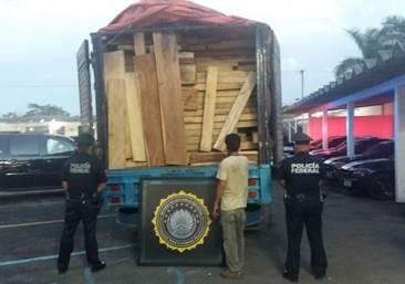 Gendarmeria asegura madera preciosa en merida yucatan