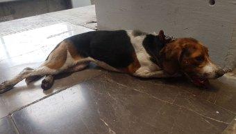 Metro, Centro Transferencia, Canina, perros, STC, Protección Civil, animales